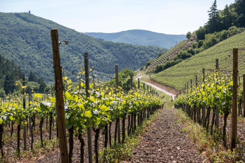Lær at forstå tysk vin på 10 min...