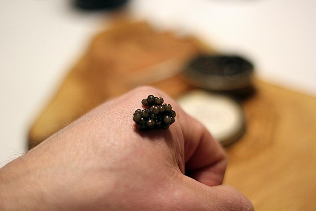 Beluga caviar (Huso Huso) - er det pengene værd?